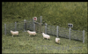 Ratio 419 Concrete Fence Posts, gates, Signs etc